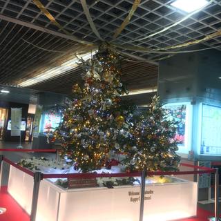 クリスマスツリー見つけた‼︎